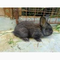 Продам кроликов любого возраста