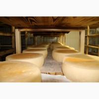 Сыр натуральный полутвердый Степной