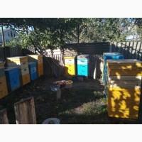 Продам пчел(карптская) в ульях (3-4 корпуса)срочно