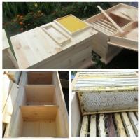 Ульи для разведенческих и матковыводящих пасек и пчелохозяйств