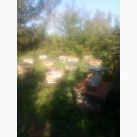 Продаю стационарную пасеку с жилым домом