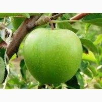 Яблоки Голден Смит