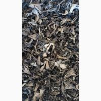 Сушеные грибы лисичка черная оптом
