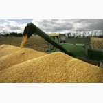 Продаем зерновые культуры оптом
