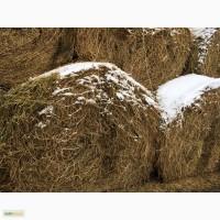 Продажа сена люцерны и сена лугового