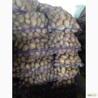 Картофель оптом от надежного поставщика в СПБ