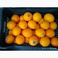 Апельсины сорт Навел из Сирии оптом и мелким оптом