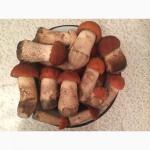 Продам замороженные отборные грибы белые, подосиновики, подберёзовики этого года