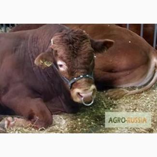 Стимулятор роста крупного рогатого скота, телят, бычков мясных пород