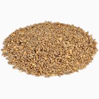 ООО НПП «Зарайские семена» закупает семена:пайза от 20 тонн