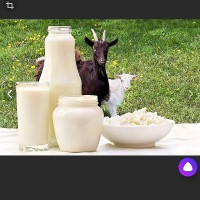 Продам козье молочко вкусное сладкое без запаха