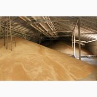Пшеница 11, 5 и 12, 5 белок, в Европу