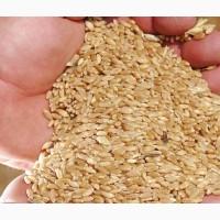 Пшеница Твердая на CIF Китай