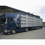 Предоставлю услуги перевозок скота