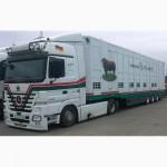 Междугородние и международные перевозки скота