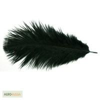 Продам перья страуса