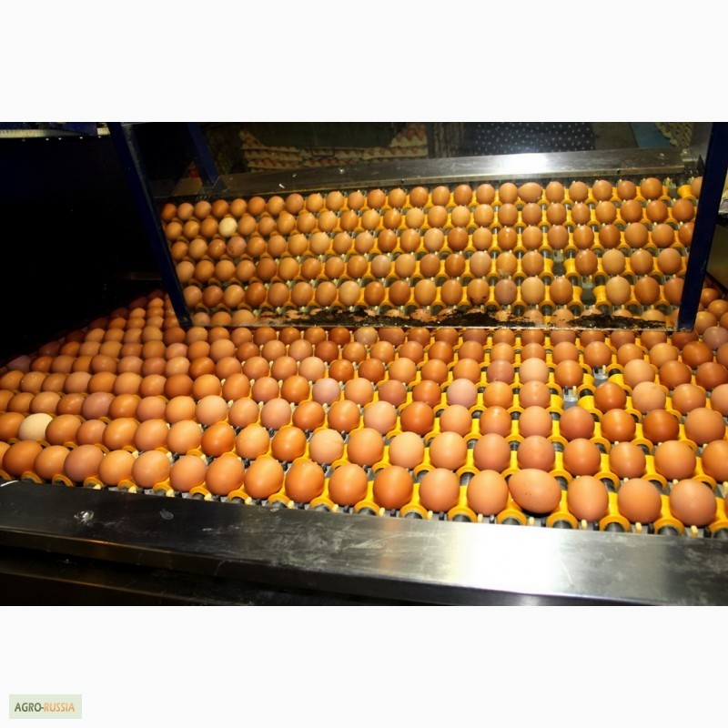 Продам/купить: инкубационное яйцо Хайсекс Браун ...: http://agro-russia.com/ru/trade/m-112948/inkubatsionnoe-yajtso-khajseks-braun/
