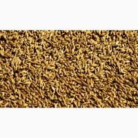 Овес, ячмень, кукуруза, пшеница, жмыхи, шрота! Ленинградская область