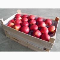 Яблоки калиброванные со склада
