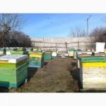 Пчелопакеты сегодня