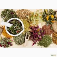 Лекарственные растения со всей России