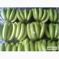 Бананы из Косте-Рики (Cavendish premium)