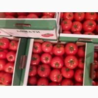Продам помидори