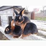 Комбикорм г. Тосно, для холостых кроликов