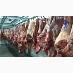 Говядина в СНГ, Азию и др. Halal