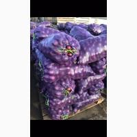 Продам лук фиолетовый
