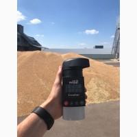 Пшеница 3 класс урожай 2018