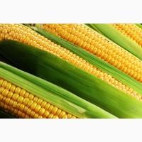 Гибриды семена кукурузы П8400, ПР37Н01, ПР39Д81, ПР39Ф58, П7709, ПР39Х32 (Пионер, Pioneer)