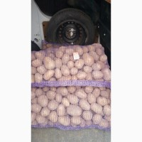 Продам продовольственный Картофель Галла