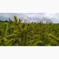 Теплицы под ключ для выращивания сеянцев