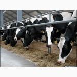 Закупаем коров-быков-лошадей