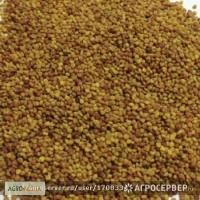 Продам:Семена клевера белого Ривендел