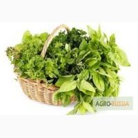 Куплю зелень мелким оптом от 10 кг, сотрудничество на постоянной основе