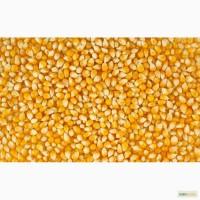Поставки кукурузы, продовольственную и фуражную пшеницу, сою