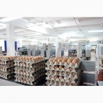 Реализуем ЯЙЦО куриное от производителя, оптом со склада