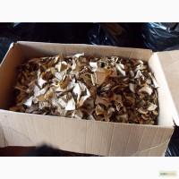 Продам Белый гриб (сушеный или с/м), гриб Лисичка