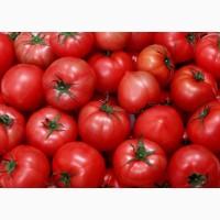 Продам томаты