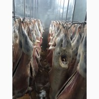 ООО Сантарин, реализует баранину, охлаждёнка, заморозка с бойни