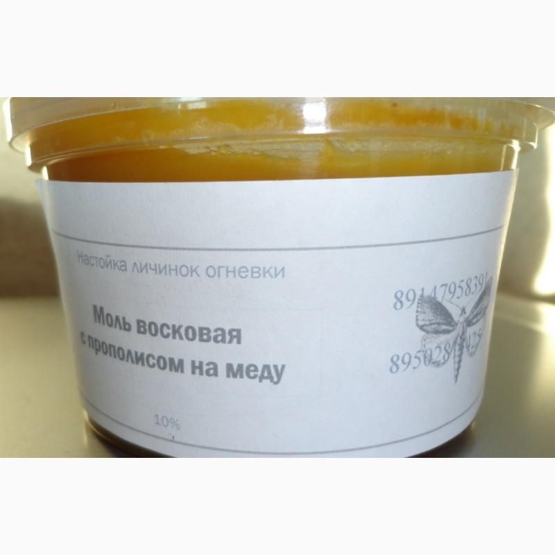 Пчелиная моль восковая с личинкой огневки на меду