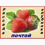 Кустики клубники самые крупноплодные и урожайные сорта-новинки от производителя-почтой