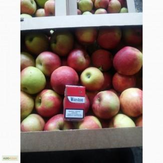Яблоки оптом 1 сорт от 20 т