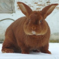 Комбикорм для кроликов с травяной мукой ПК 90