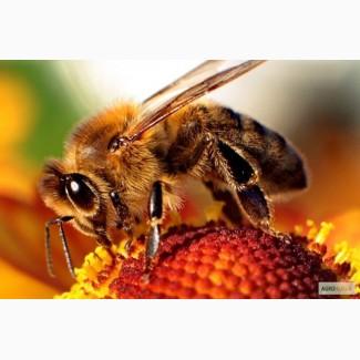 Пчелиный яд. Маточное молочко