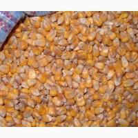 Зерно кормовое: овес, пшеница, ячмень, кукуруза, жмых, шрот в Нижегородской области
