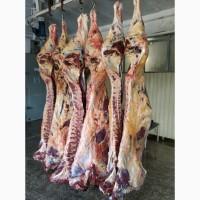Говядина корова 1 категории от производителя 209