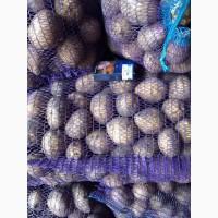 Продам продовольственный картофель Галла, Журавинка